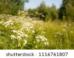 background image of the forest... | Shutterstock . vector #1116761807