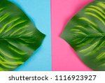calathea leaves as tropical... | Shutterstock . vector #1116923927