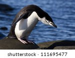 Chinstrap penguin, Antarctica - stock photo