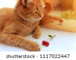 ginger beautiful cat with... | Shutterstock . vector #1117022447