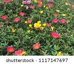 beautiful vibrant colorful... | Shutterstock . vector #1117147697
