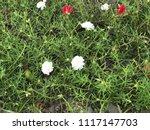 beautiful vibrant colorful... | Shutterstock . vector #1117147703