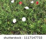 beautiful vibrant colorful... | Shutterstock . vector #1117147733