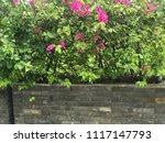 beautiful vibrant colorful... | Shutterstock . vector #1117147793