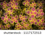colorful leaves pattern of... | Shutterstock . vector #1117172513