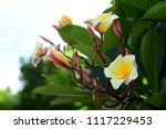 colorful flowers.group of... | Shutterstock . vector #1117229453
