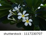 colorful flowers.group of... | Shutterstock . vector #1117230707