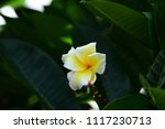 colorful flowers.group of... | Shutterstock . vector #1117230713