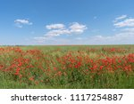 abundance of red poppies in a...   Shutterstock . vector #1117254887