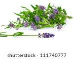 flower of lavender on a white... | Shutterstock . vector #111740777