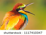 funny color bird with open beak ... | Shutterstock . vector #1117410347