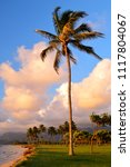 a lone palm tree sways in the... | Shutterstock . vector #1117804067