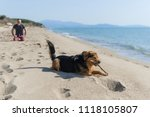dog sitting on the beach with a ... | Shutterstock . vector #1118105807