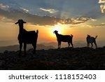 small livestock jobs in spring... | Shutterstock . vector #1118152403