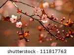 beautiful flowering japanese... | Shutterstock . vector #111817763