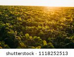 soy field at sunset   Shutterstock . vector #1118252513