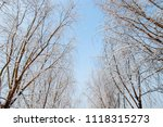 snow scenery and rime in the... | Shutterstock . vector #1118315273