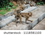 mating of monkeys in thailand. | Shutterstock . vector #1118581103