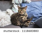 a beautiful bengal cat... | Shutterstock . vector #1118683883