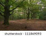 beech forest in summer | Shutterstock . vector #111869093