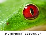 Frog Isolated On White...