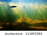 Beautiful Underwater View Of A...