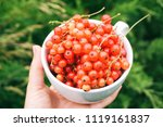 hands holding a white mug with... | Shutterstock . vector #1119161837