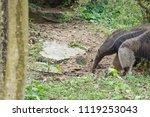 anteater in forest | Shutterstock . vector #1119253043