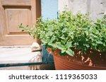 fresh mint in a pot  old door... | Shutterstock . vector #1119365033