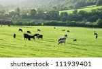 Cattle Grazing on Farmland - stock photo