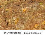 yellow brown stone wall with... | Shutterstock . vector #1119625133