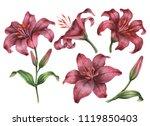 set of watercolor lilies  hand... | Shutterstock . vector #1119850403