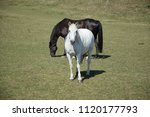 black and white horse | Shutterstock . vector #1120177793