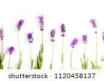 the lavender flowers isolated... | Shutterstock . vector #1120458137