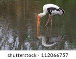 great white pelican  pelecanus... | Shutterstock . vector #112066757