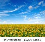 sunflowers field on sky... | Shutterstock . vector #1120743563