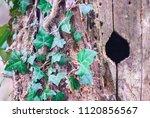 bird's nest on the trunk  hole... | Shutterstock . vector #1120856567