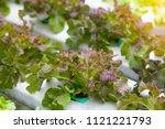 organic fresh hydroponic... | Shutterstock . vector #1121221793