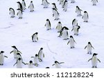 Group of adelie penguin on snow - stock photo