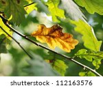 Dry oak leaf among fresh ones - stock photo