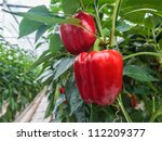 Two Ripe Red Bell Peppers In A...