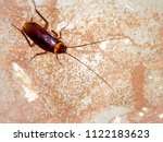 the cursed insect on the wall.... | Shutterstock . vector #1122183623