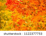 bright autumn leaves in the... | Shutterstock . vector #1122377753