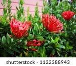 spike flower  red flower spike... | Shutterstock . vector #1122388943