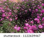 close up spring purple flowers... | Shutterstock . vector #1122639467