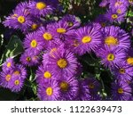 close up spring purple flowers... | Shutterstock . vector #1122639473
