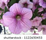 close up of colorful spring... | Shutterstock . vector #1122650453