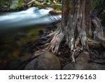 detail of gnarly  dead tree... | Shutterstock . vector #1122796163