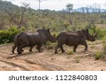Small photo of Three black rhinoceros, or hook-lipped rhinoceros (Diceros bicornis), scamper through the bush in the Madikwe National Park and Game Reserve in South Africa.