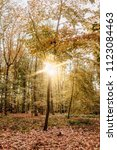 sunlit beech forest in fall... | Shutterstock . vector #1123084463